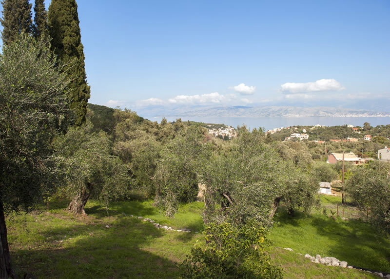 Villa Panagiota Olive Grove
